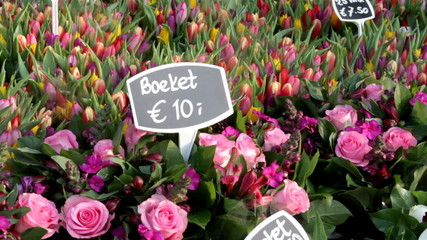 Dutch flowers from Holland