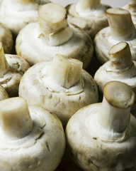 Mushrooms. Champignon