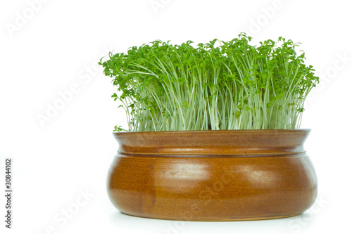 cress isolated