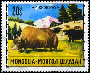 MONGOLIA - CIRCA 1971 Yaks