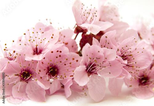 branche en fleur
