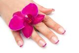 Fototapety mano di donna con orchidea