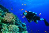 Young Woman Scuba Diving among tropical fish poster