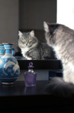 Cat watching in the mirror poster