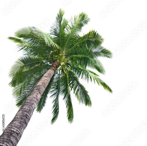 Papiers peints Palmier Palm Coconut Tree