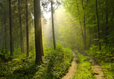 Fototapety forêt