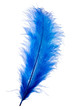 Blue feather