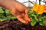 Gartenarbeit