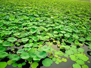 Summer Palace in Beijing, China (Gardens of Nurtured Harmony)