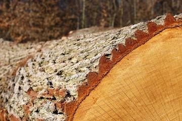 Holz Textur © Matthias Buehner