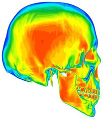 Thermal image of the human skull, isolated on white