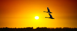 Fototapete Sonnenuntergänge - Wildlife - Vögel