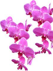 superposition d'orchidée