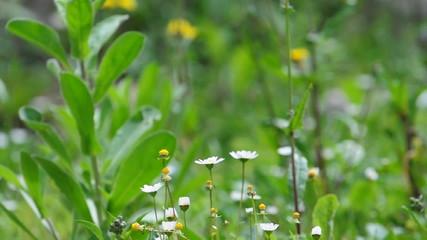 Feld mit Blume