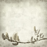 Fototapety textured old paper background with spring branch with catkins