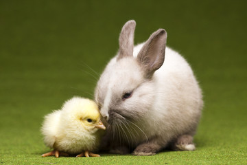 Easter bunny on chick