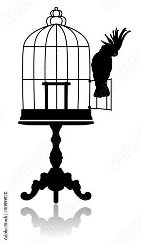 Keuken foto achterwand Vogels in kooien Birdcage