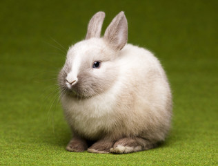 A rabbit isolated green background