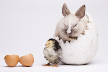 Chickens in bunny