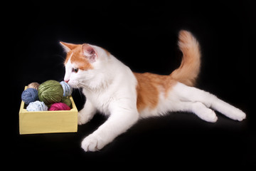 cat playing with knitting