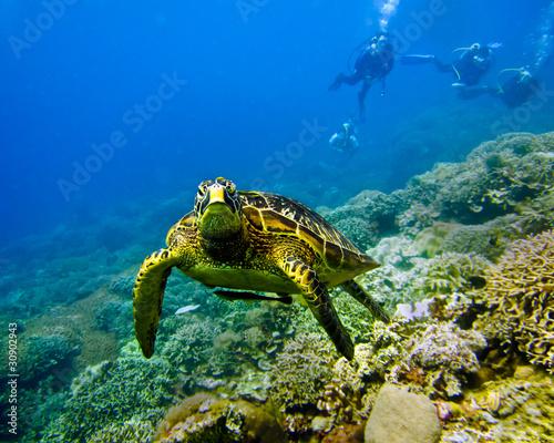 Foto op Plexiglas Schildpad Turtle with Divers