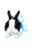 rabbit with blue ribbon isolated