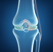 X-ray concept of knee joint closeup view. On blue background