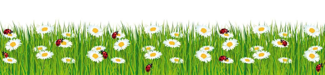 Fresh green grass banner with daisies and ladybugs