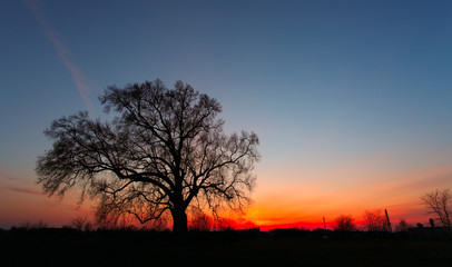 Beautiful landscape image with trees silhouette at sunset.
