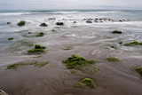 Mar, algas y piedras poster