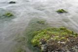 Detalle de rocas con algas y oleaje poster