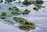 Rocas con algas en el mar poster