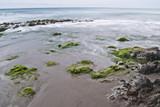 Playa con rocas y algas poster