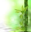 Fototapeten,bambus,landesgrenzen,isoliert,spa