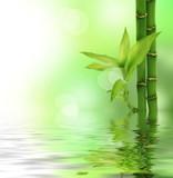 Bamboo - 30933910