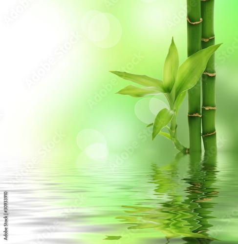 motyw-bambusowego-szumu