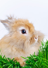 Easter Bunny. Cute rabbit sitting on green grass.
