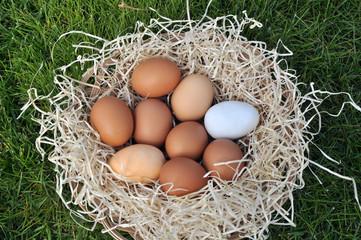 Uova fresche biologiche nel cesto