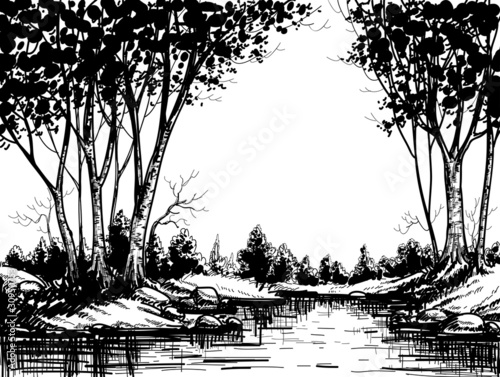 Lake in the birch forest - 30950753