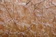 dry skin texture