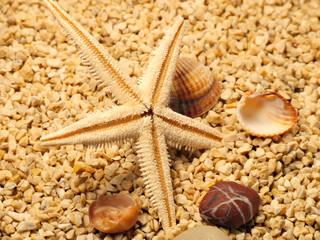 Meerstilleben