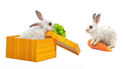 The rabbit in the yellow box