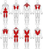 human body back poster