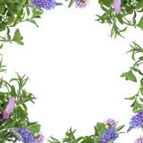 Fototapety Herb Flower Border