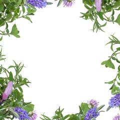 Herb Flower Border