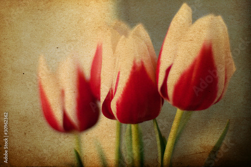 spring flowers, vintage grunge pattern - 30962362