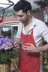 Florist stands cutting hydrangea
