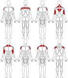 human body shoulder poster