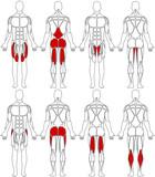 human body legs poster