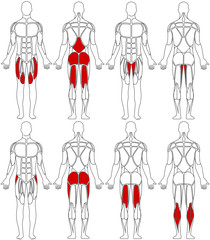 human body legs
